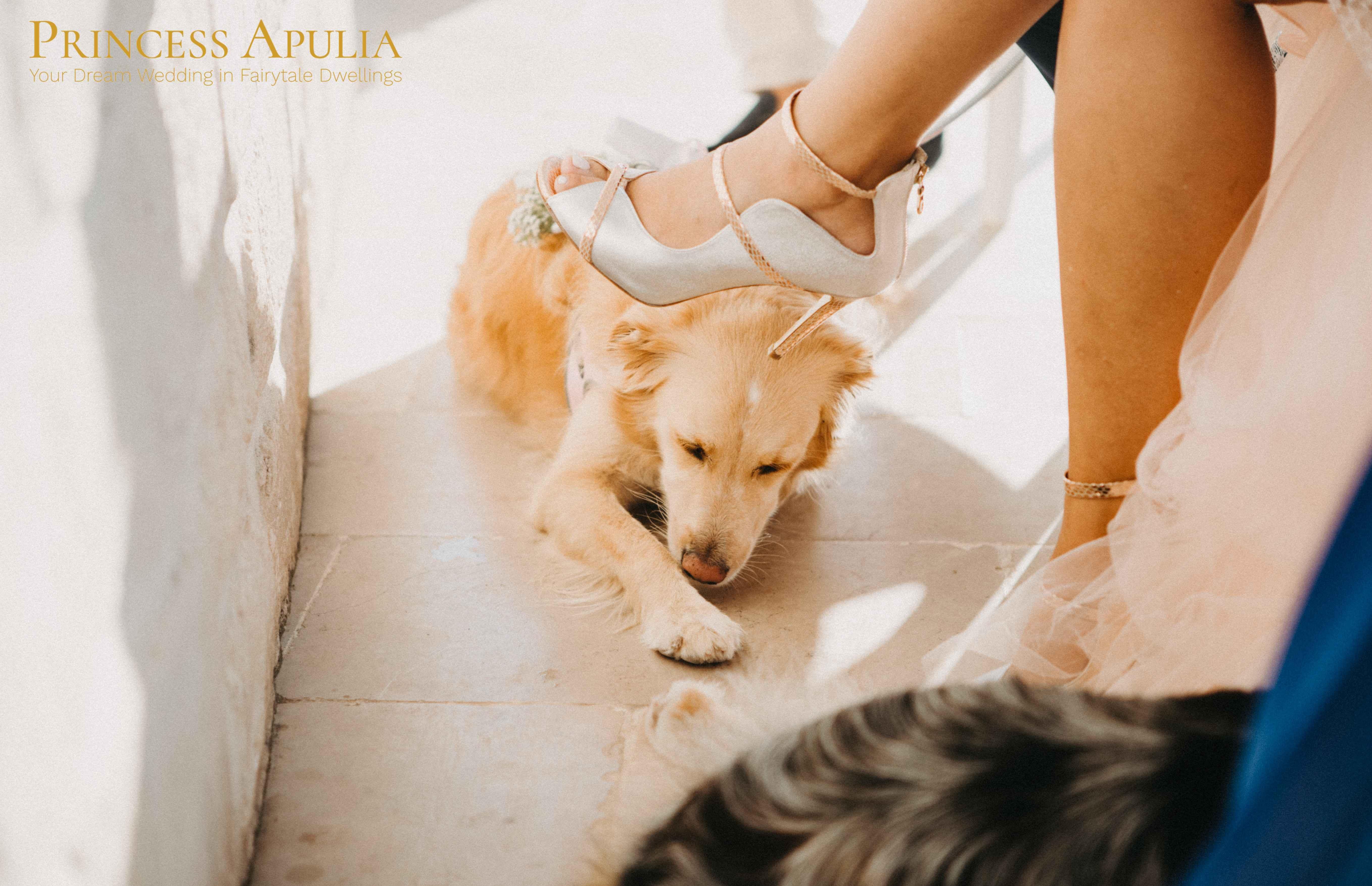 wedding with dog